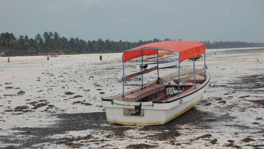 Odpływ oceanu na Zanzibarze